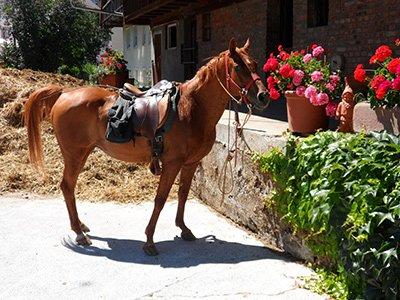 Anonym Scheisse schenken per Pferdemist