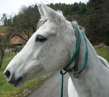 Furchterregendes Pferd Rache Bezugsbedingungen